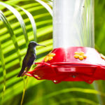 Yerette Humming Bird Sanctuary